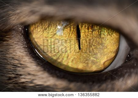 close up of a cat eye, yellow cat eye