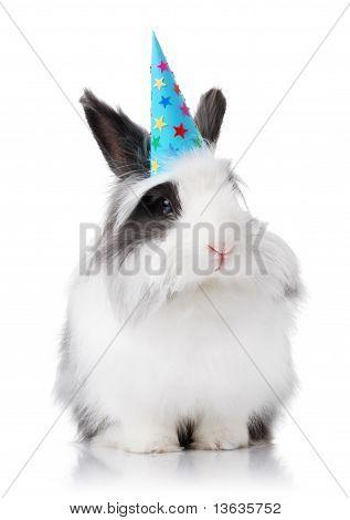 Lindo conejo con sombrero azul cumpleaños
