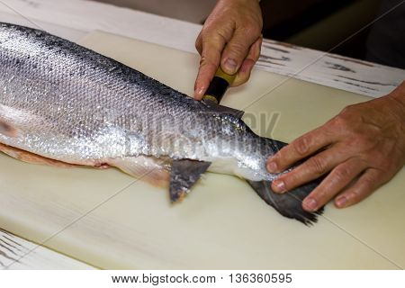 Kitchen knife cutting raw fish. Male hand touches raw fish. Chef cleans fresh salmon. Ingredient for high protein dish.