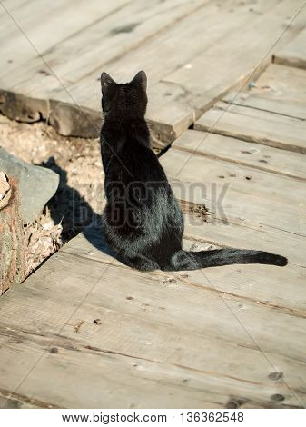 Black cat sits on the wooden floor