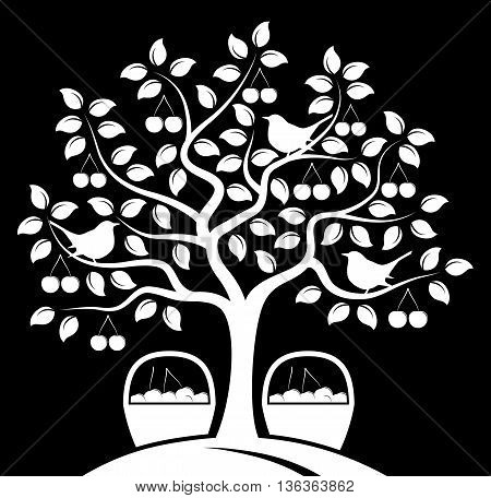 vector cherry tree with birds and baskets of cherries isolated on black background