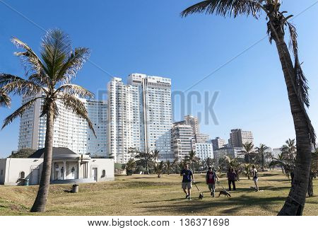 Adults Walk Dogs On Grassed Area Between Palm Trees