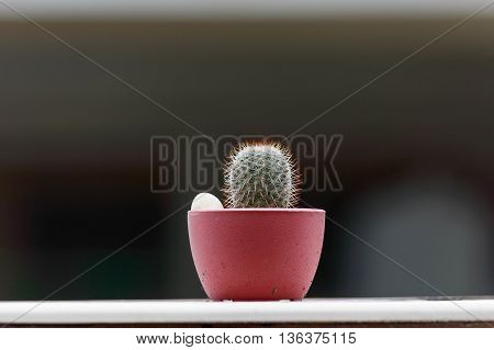 Mammillaria cactus species in Mini Potted plants Were placed at border of the Wall.