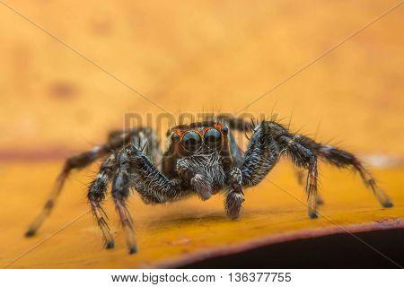 Animal Jumping spider at Hong Kong view