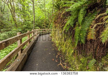 Path in forest leading to Madison Falls in the Olympic Peninsula of Washington.