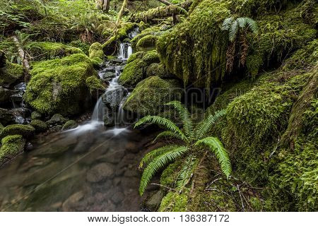 Moss covered rocks in rain forest near Sol Duc Falls in Washington.