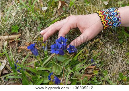 Female hand touching wildflowers in the suburban area. Nature