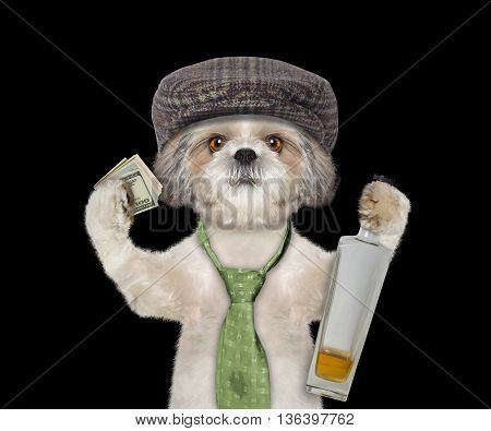 dog having fun and drinking alcohol -- isolated on black