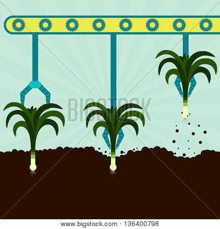Mechanical Harvesting Leeks