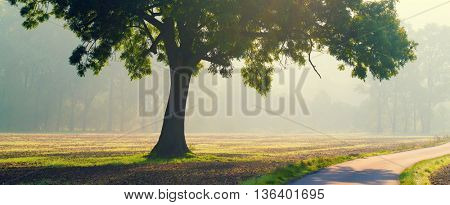 Alone tree at early morning . Summer sunrise