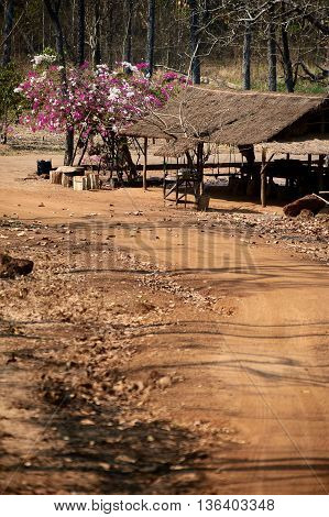 Thatch on wooden poles at the road in Cambodia