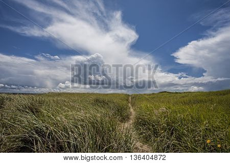 Tall grass under a blue sky at the south end of Ocean Shores Washington.