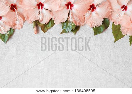 Pink Hibiscus flowers on linen copy space background selective focus toning
