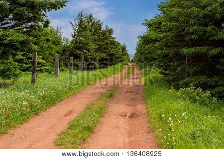 Down an old dirt road to the ocean in rural Prince Edward Island, Canada.