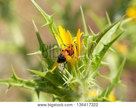 A large beetle sits on a flower