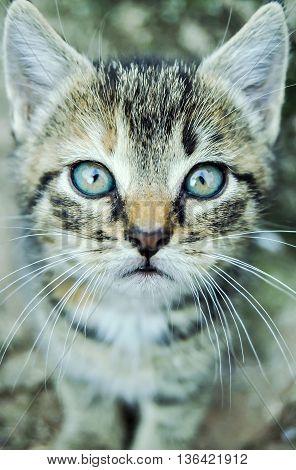 Soft kitty warm kitty, little ball of fur