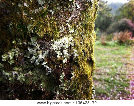 Tree Mos Greenery Lithophyte Nature Concept