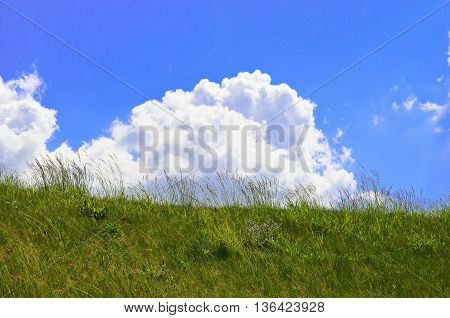 Green field and cloudy blue sky landscape