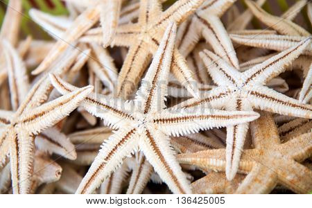 Dried starfish on store shelves as a background.