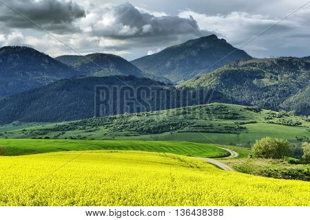 Hill Choc and yellow rapeseed field Slovakia