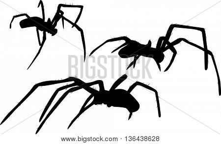 illustration with three spider silhouettes isolated on white background