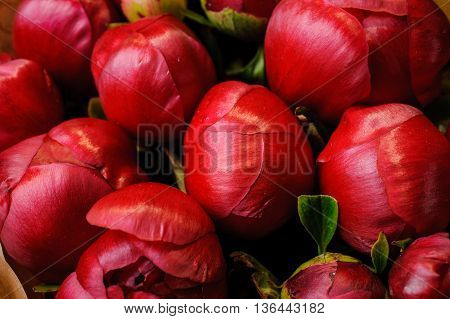 fresh red peony flowere texture background close up