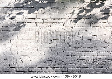 Rough White Painted Brick Wall With Shadows Of Tree Branches