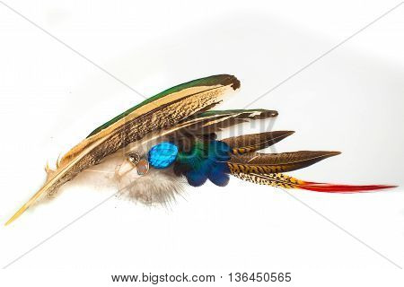 Bright colorful feather with gems on white background