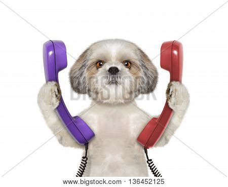 dog keeps phone and going to make a call -- isolated on white background