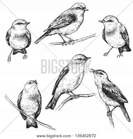 Hand drawn set of forest birds isolated on white. Monochrome vector sketch of sitting songbirds.
