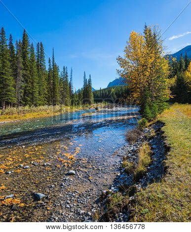 Beneaped creek autumn in Banff National Park. Pine forest in  Rocky Mountains. Canada