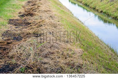 The waterway is cleaned in a Dutch polder and the sides are cut to maximize drainage. The grass clippings and plant residues are on the edge.