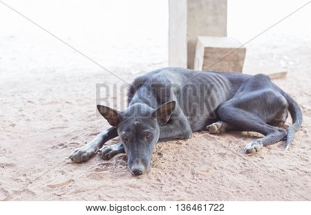 Black skinny stray dog lying shabby homeless