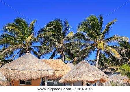 Coconut Palm Tree Blue Sky Hut Palapa Sun Roof