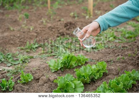 Hand with a test tube and salad plant. Fertilizer in laboratory glassware.