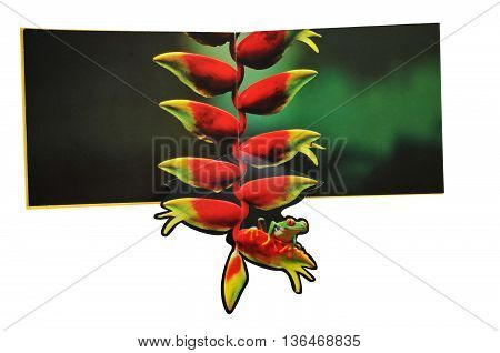 KIEV UKRAINE - April 19 2011:Open book with pictures of animals. Isolated on white background children's book illustration with the image of frog on a flower