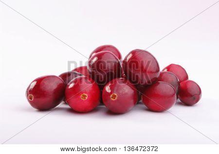 Fresh Wild Cranberries. Studio Shoot.