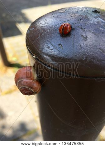 Three small animals (slug, greenfly and ladybird) on a metal pole