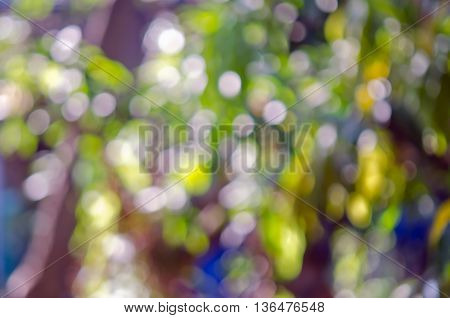 Abstract defocused bokeh background of trees leaves and lighting