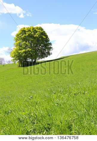 Isolated Tree In The Middle Of The Green Meadow
