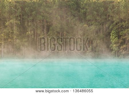 lonely tree in lake with morning mist
