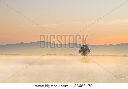 Lonely tree on the ground with morning mist