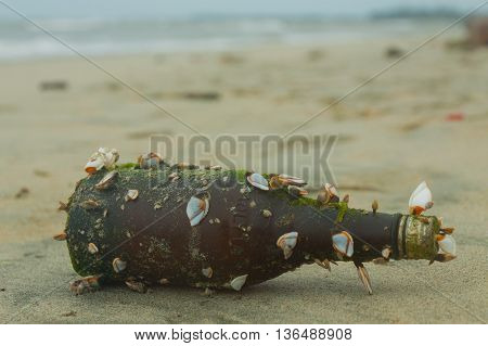 Sea beach. A bottle with a message. Shells on the sand.