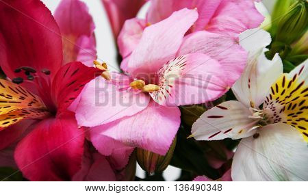 Bouquet Of Alstroemeria Flowers