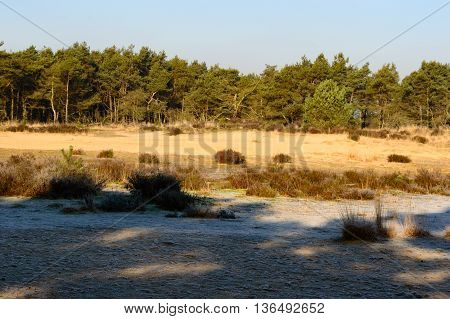 Early autumn prairie and forest scene with slight frost on the ground and shadows from trees in foreground