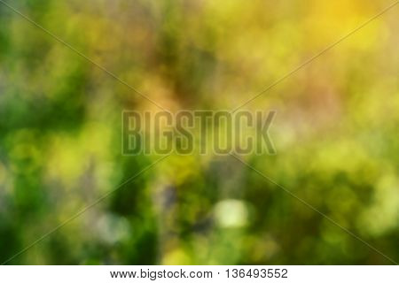 Green abstract bokeh background created in forest