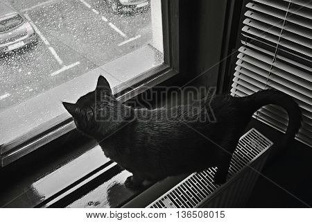 dramatic photo taken of a black cat looks in window a heavy rain announced for Chomutov city by the Czech Meteorological Institute