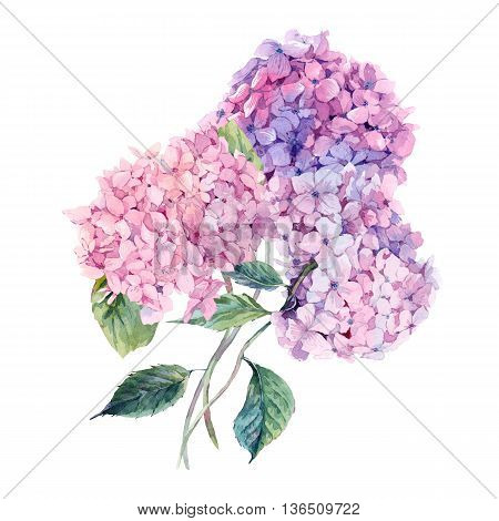 Summer Watercolor Vintage Floral Greeting Card with Blooming Hydrangea, Watercolor botanical natural hydrangea Illustration isolated on white