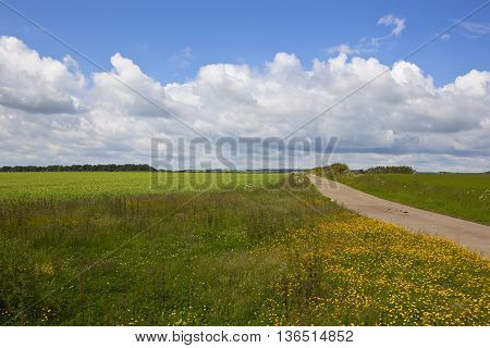 Footpath With Buttercups