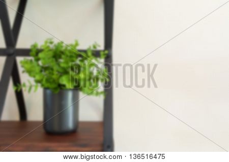 Blur closeup green tree on pot indoor house